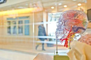 cerveau et couloir vitré